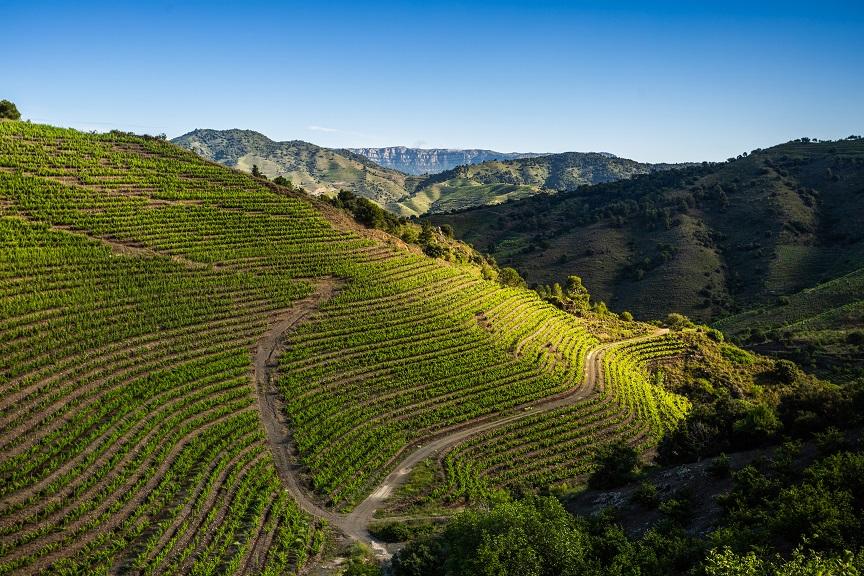 priorat wineries