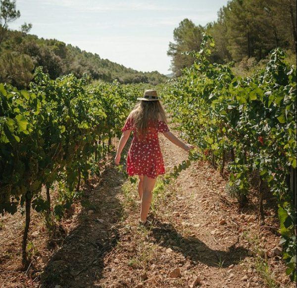 pasear entre viñas